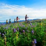 Trek To Table 2016 Moves to Vail Mountain